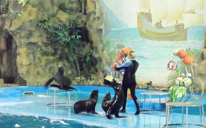 Харьков. Дельфинарий, представление