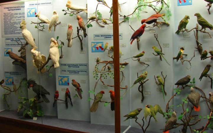 Музей естественной истории. Тропические птицы