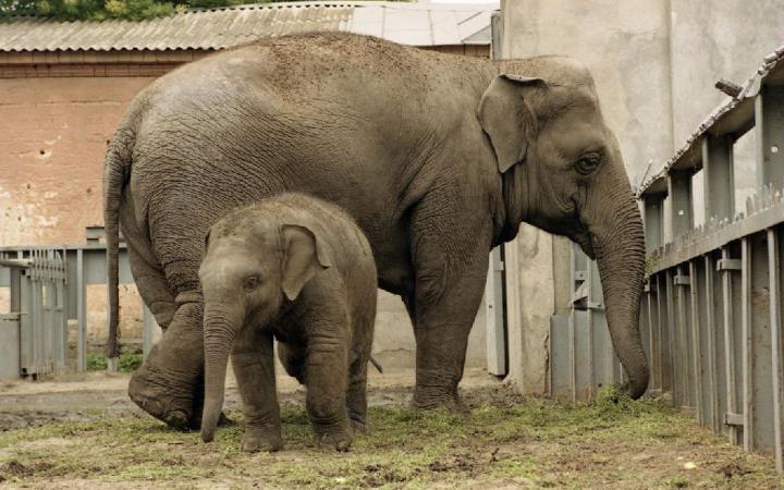 Одесский зоопарк. Слоны