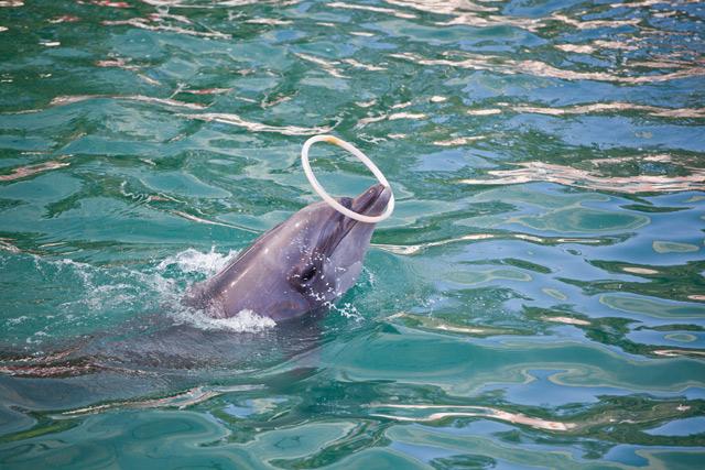 Дельфинарии Украины