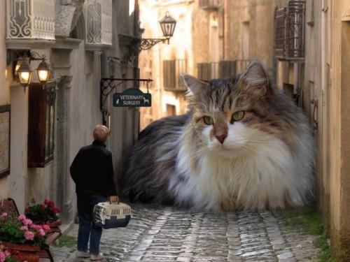 Очень большой кот