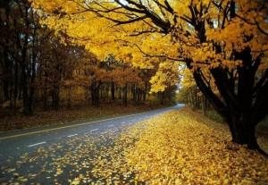 Афоризмы про Осень