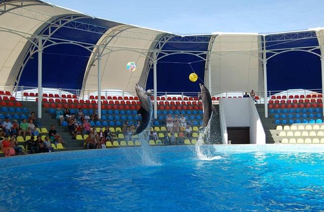Алуштинский дельфинарий. Алушта.