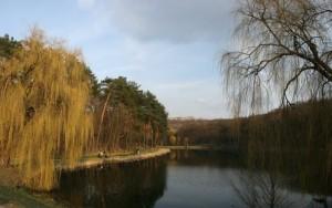 Голосеевский парк. Киев.