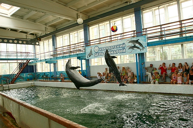 Карадагский дельфинарий. Феодосия.