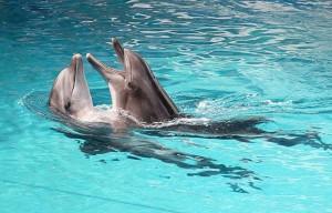 Ялтинский дельфинарий. Ялта.