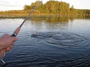 Платные места для рыбалки. Киев.