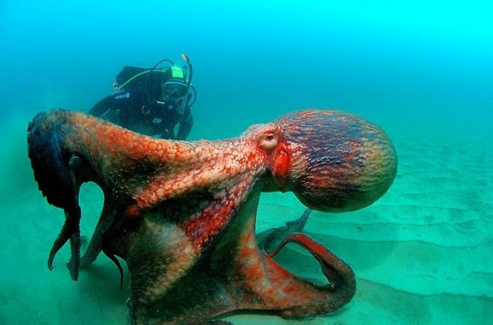 Видео дайвинга. Удивительный подводный мир
