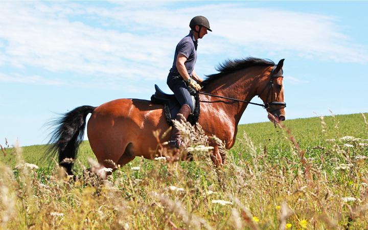 Цены на катание на лошадях в Киеве