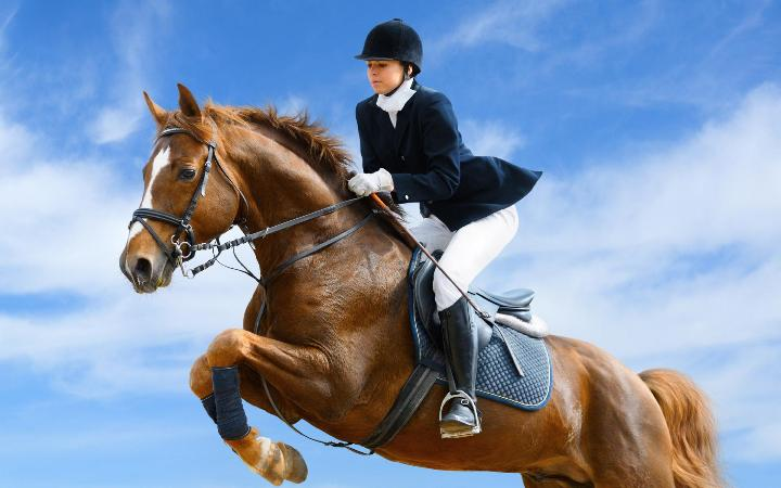 верховая езда, одежда для верховой езды, где купить одежду для верховой езды