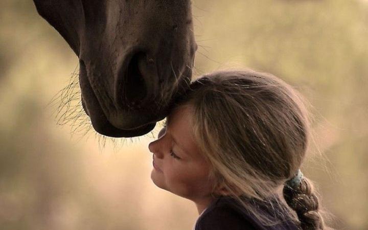 Катание на лошадях и пони для детей в Киеве