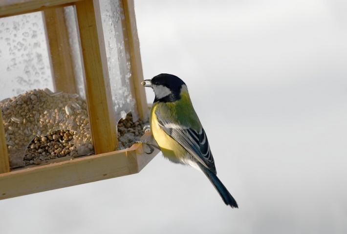 Международный день птиц. 1 апреля