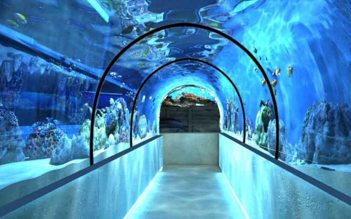 поход в дельфинарий и океанариум, программы и экскурсии, стоимсть уик-энда