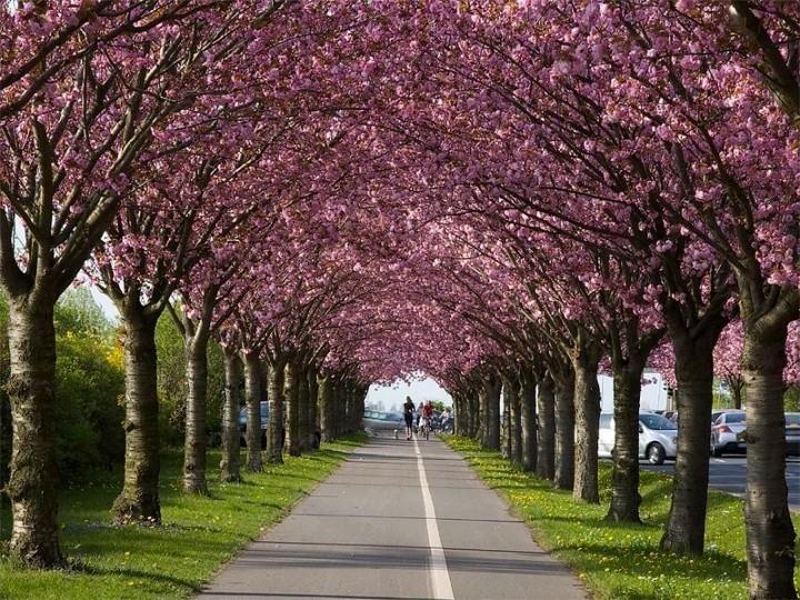 Как провести майские праздники. Идея для отдыха