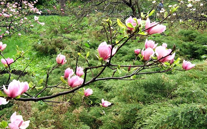 Весна в ботанических садах Киева