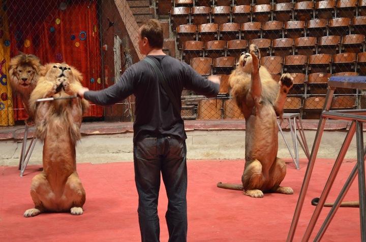 Интервью с дрессировщиками львов