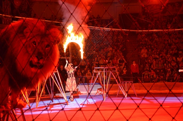 За кулисами киевского цирка