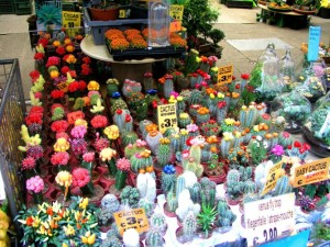 Кактусы. Интересный факты о кактусах