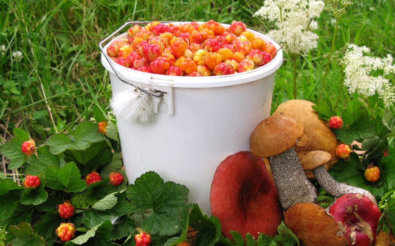 В лес по грибы и ягоды