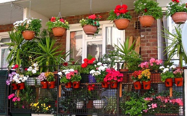 Лучшие растения для выращивания на балконе