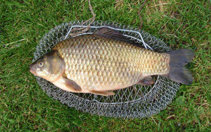 Рыбалка летом. Ловля карася.