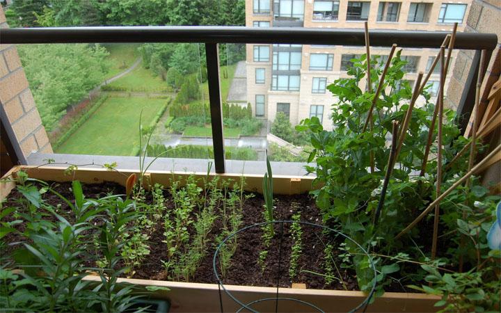 Огород в квартире. Советы по обустройству
