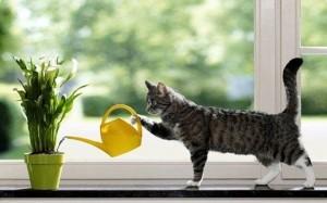 Как правильно поливать и мыть комнатные растения