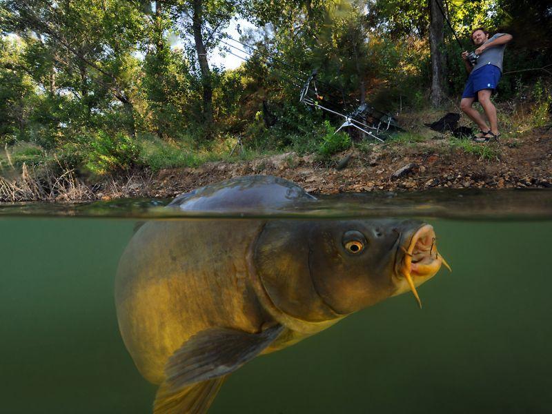 скачать бесплатно рыбалку через торрент - фото 9