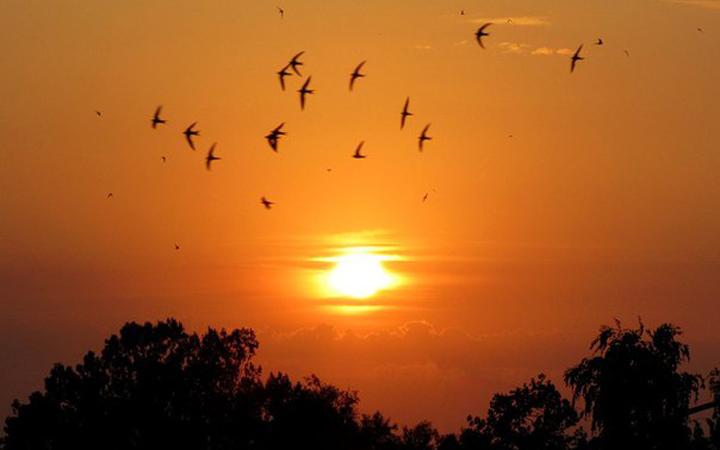 Последние аккорды лета. Ласточки. Закат. Лето. Природа