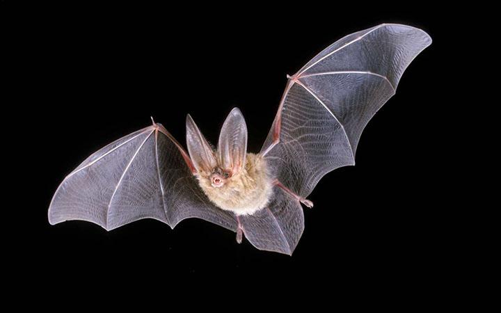 Международная ночь летучих мышей. 20 сентября