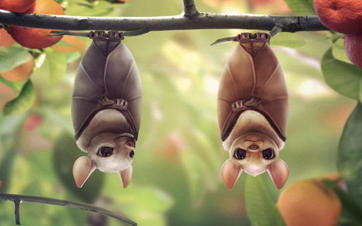 Международная ночь летучих мышей