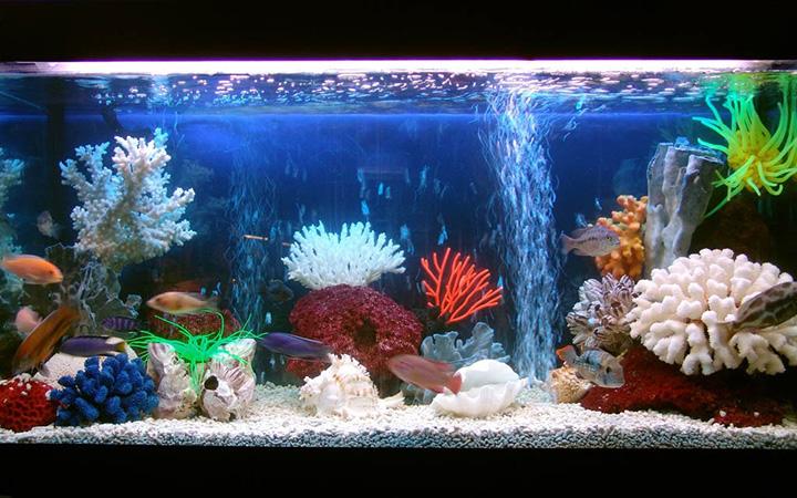 Мастер-класс по оформлению аквариума