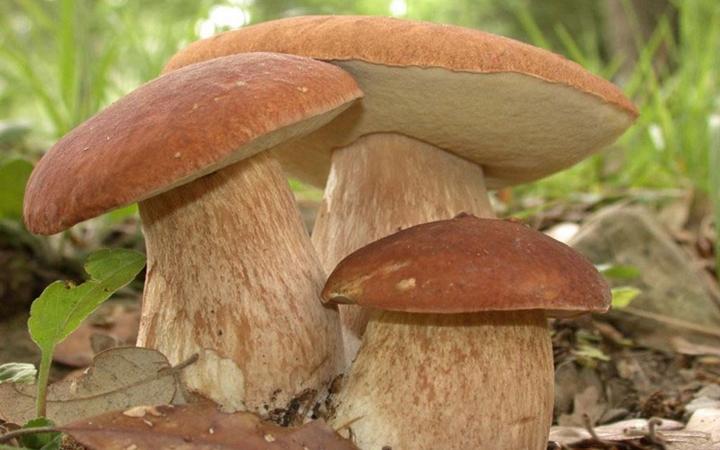 Собираем грибы. Что важно знать