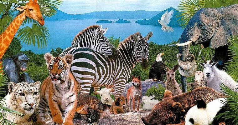 Идея на выходные: в мире животных