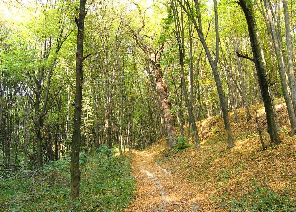 Где погулять в лесу в пределах Киева