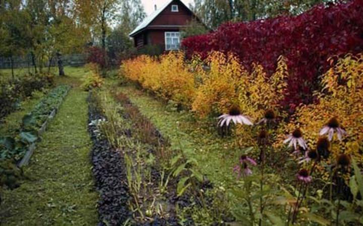 Осенний отдых на даче