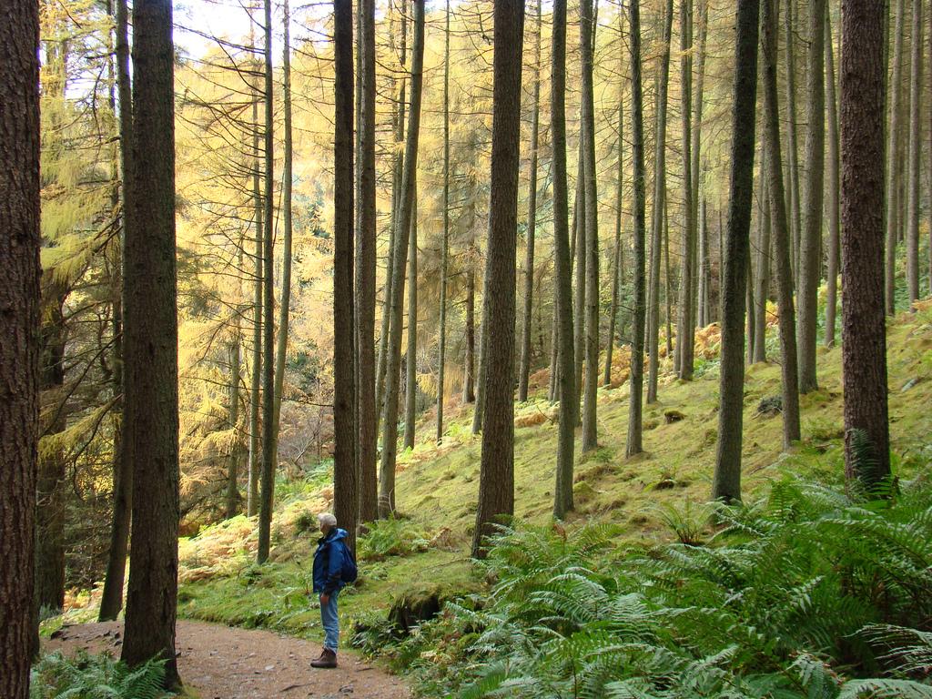 Как не заблудиться, гуляя в лесу