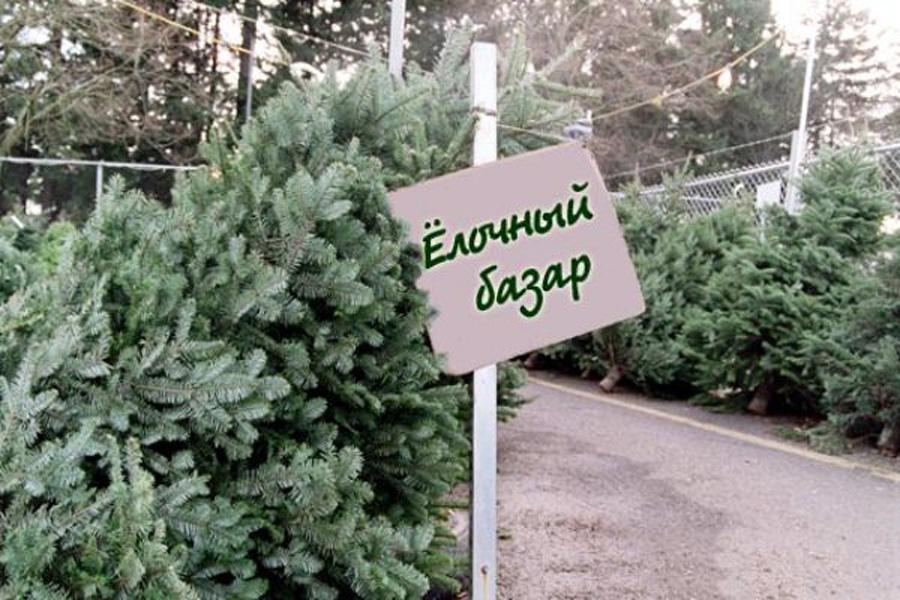 Где купить елку в Киеве