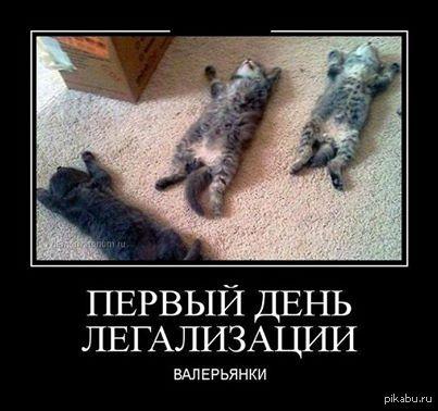 Коты любят валерьянку