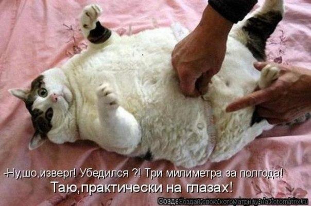 Толстые коты