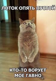 Удивленный кот. Прикол