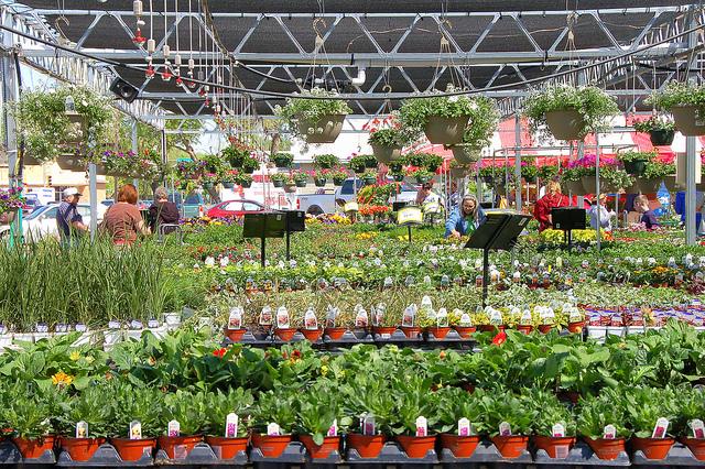 Приобретаем растения в цветочном магазине