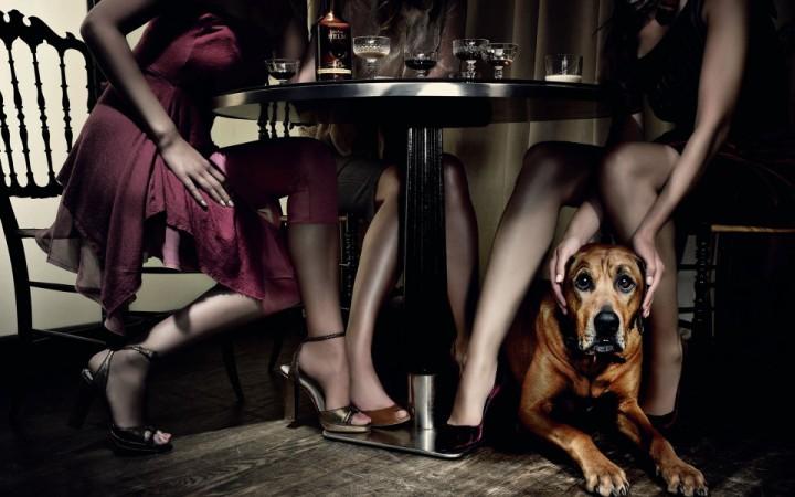 Рестораны Киева, в которые пускают с собаками