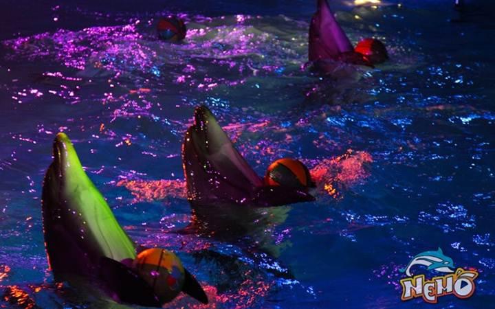 Встречаем весну в дельфинарии «Немо»