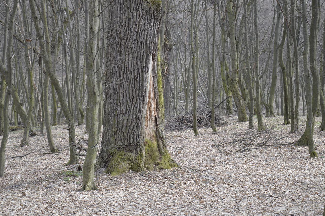 Голосеевский лес ранней весной