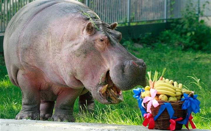 Киевский зоопарк приготовил подарок для женщин на 8 марта