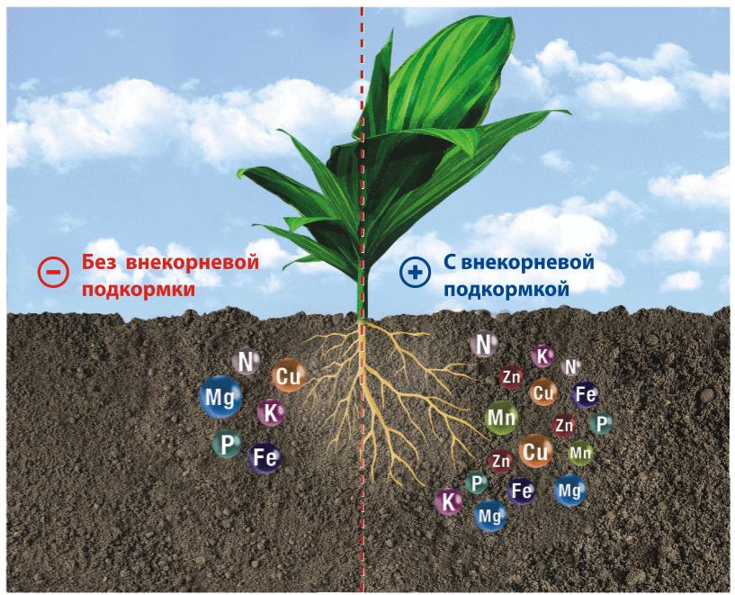 Выбираем удобрение для комнатных растений