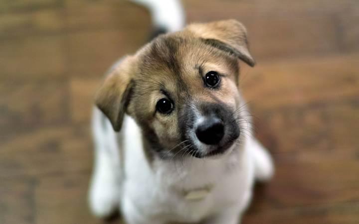 В парке Шевченко пройдет день бездомных собак