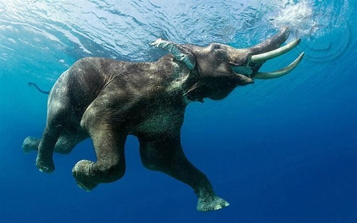 Слон природа вода море купание