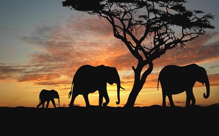 Слон природа закат лето африка